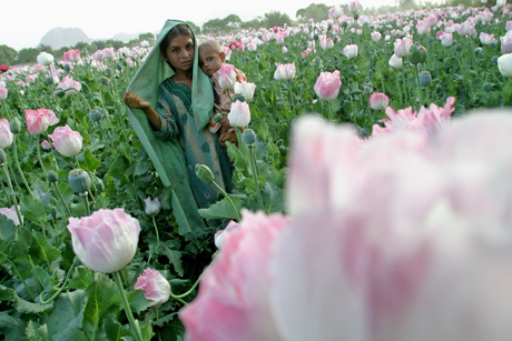 Young Afghan girl holding a baby as she walks in a poppy field in Kandahar, Afghanistan, 4/4/04--Photo Heidi Levine